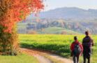 Wandern in Bad Bellingen