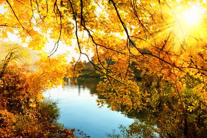 Herbstsonne am Rhein